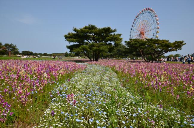ブログ用ひたち海浜公園_0287