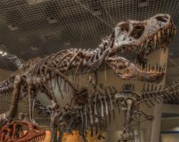 恐竜って実際のとこ弱かったらしいな