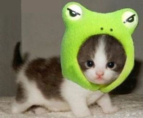 シュレディンガーの猫マヂゅるせなぃ……