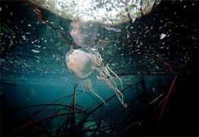 地球上で最も危険な生物の名前wwwwwwwwwwww