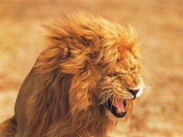 人間が素手で勝てる動物の限界は?