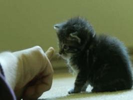 動物の可愛いGIF画像くれ