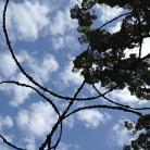 青木野枝4