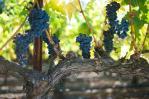 Winery-PaulHobbs2.jpg