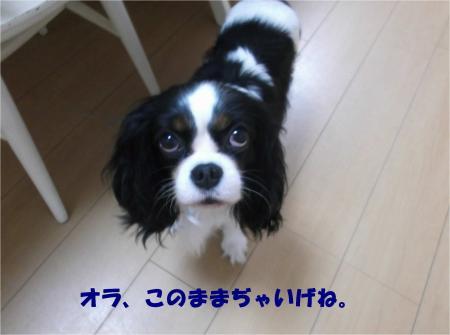 01_convert_20141031171319.jpg