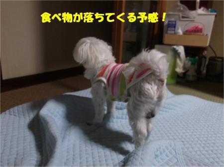 03_convert_20141022175519.jpg