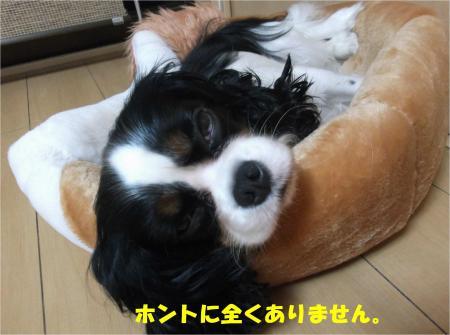 03_convert_20141111172935.jpg