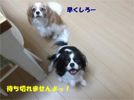 03_convert_20141112172916.jpg