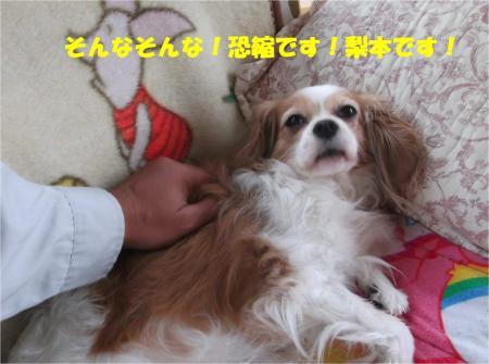 05_convert_20141107175709.jpg