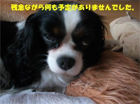 06_convert_20141107175718.jpg