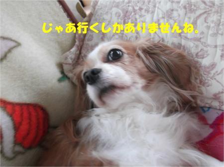 07_convert_20141107175727.jpg