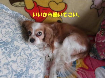 07_convert_20141121174822.jpg