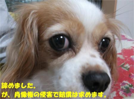 08_convert_20141022175606.jpg