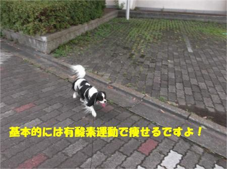 08_convert_20141104174749.jpg