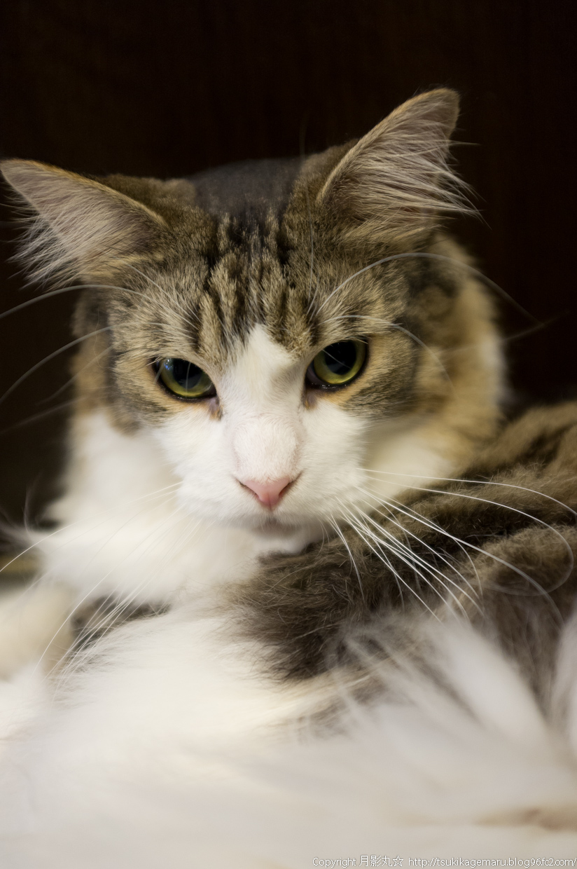 凛とした瞳の~猫写真