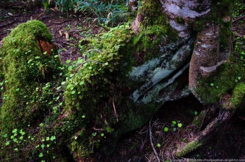 黒曜の森1
