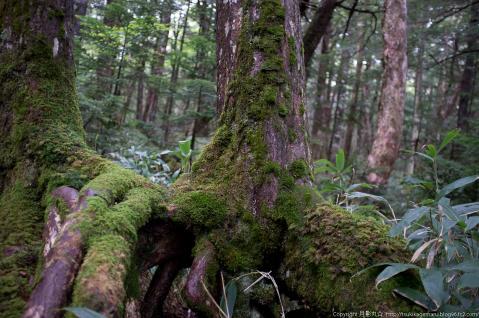 黒曜の森2
