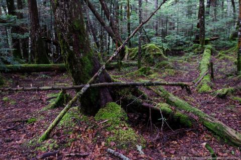 黒曜の森3