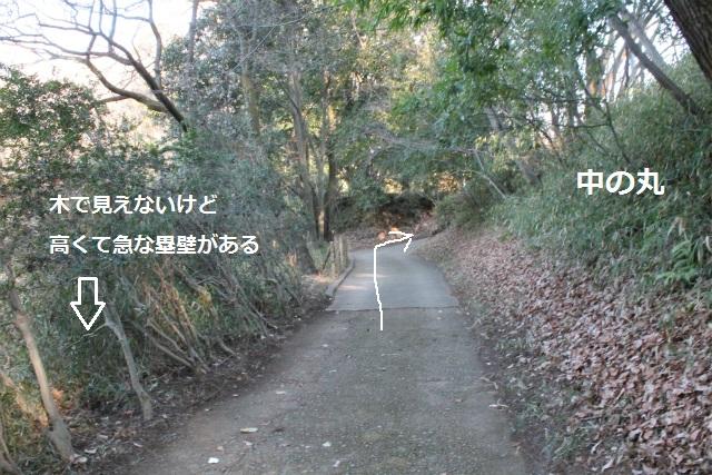 IMG_3517.jpg