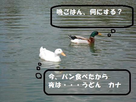 041901.jpg