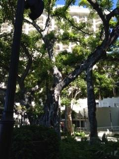 モアナサーフライダ― 大木