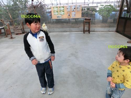 CIMG1923_convert_20130428184724.jpg