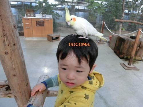 CIMG1974_convert_20130428185254.jpg