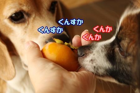 5_20131015103544a73.jpg
