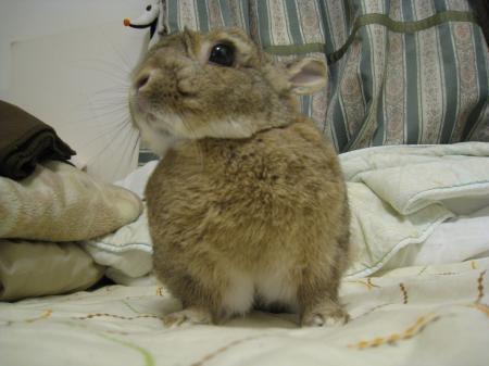 「はぐ、ナキウサギみたいだね(^_^)」