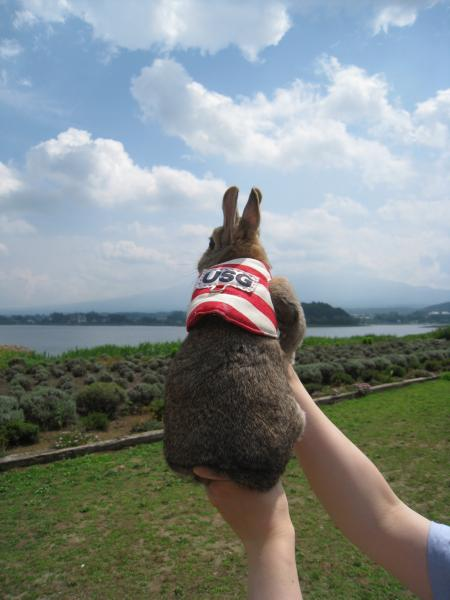 富士山、見えるの~?