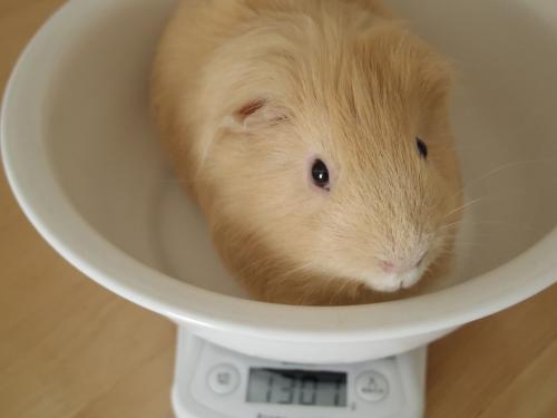 体重測定2014年10月28日1