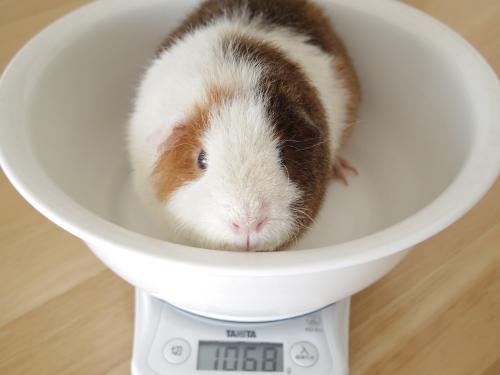 体重測定2014年11月5日2