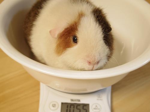 体重測定2014年11月10日1