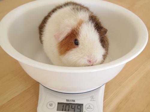 体重測定2014年11月19日2