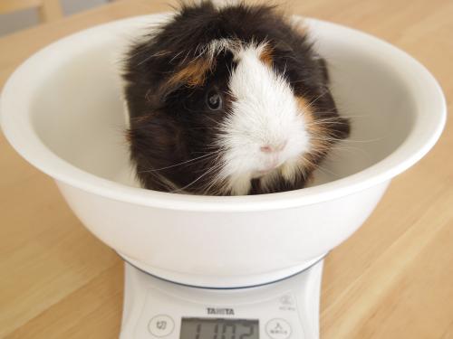 体重測定2014年11月19日3