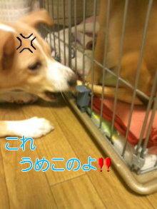 うめめのいつもワンコと一緒ブログ-101111_0006~01_0001.jpg