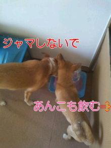 うめめのいつもワンコと一緒ブログ-101119_0813~01_0001.jpg