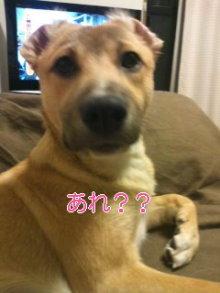 うめめのいつもワンコと一緒ブログ-110121_2011~01_0001.jpg