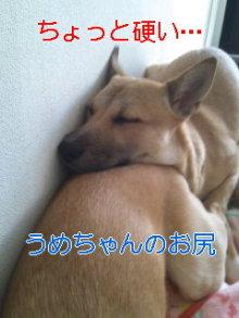 うめめのいつもワンコと一緒ブログ-110216_1431~02_0001.jpg