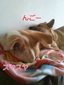 うめめのいつもワンコと一緒ブログ-110216_1432~01_0001.jpg