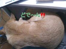 うめめのいつもワンコと一緒ブログ-110216_1640~01_0001.jpg