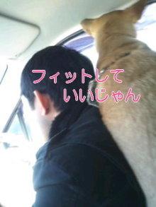 うめめのいつもワンコと一緒ブログ-110227_1304~02_0001.jpg