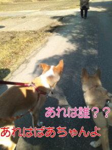 うめめのいつもワンコと一緒ブログ-110227_1336~01_0001.jpg