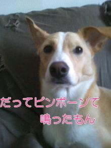 うめめのいつもワンコと一緒ブログ-110331_1440~01.jpg