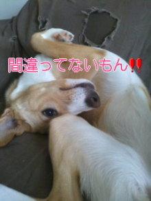 うめめのいつもワンコと一緒ブログ-110331_1443~01.jpg