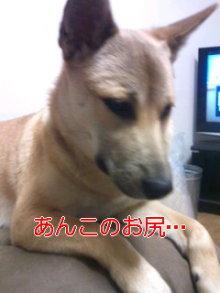 うめめのいつもワンコと一緒ブログ-110401_1758~01.jpg