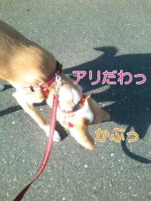 うめめのいつもワンコと一緒ブログ-110406_1530~01_0001.jpg