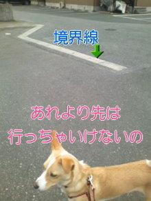 うめめのいつもワンコと一緒ブログ-110408_1106~01_0001.jpg