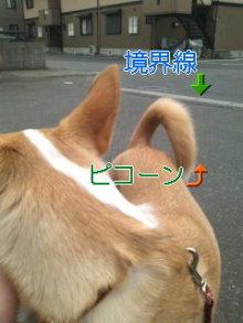 うめめのいつもワンコと一緒ブログ-110408_1107~01_0001.jpg