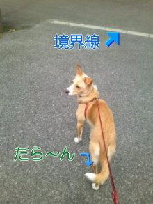 うめめのいつもワンコと一緒ブログ-110408_1108~01_0001.jpg